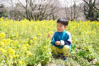 子ども,風景,花,屋外,黄色,草,樹木,人物,人,赤ちゃん,幼児,少年,男の子,若い,草木