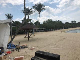空,屋外,ビーチ,雲,砂浜,海岸,樹木,シンガポール,ヤシの木,日中