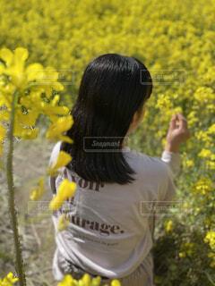 風景,花,屋外,黄色,樹木,人物,人,菜の花畑