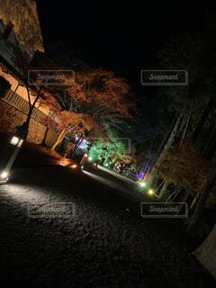 夜,暗い,樹木,ライトアップ,道,明るい,寺,街路灯