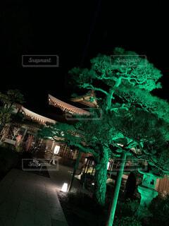 空,夜,屋外,樹木,ライトアップ,明るい