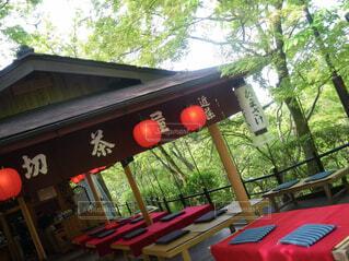 自然,屋外,京都,赤,樹木,修学旅行,草木,テキスト,風景画