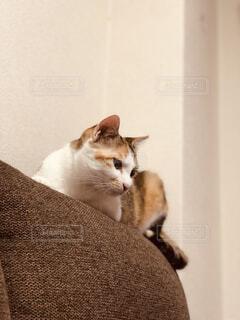 猫,動物,屋内,白,子猫,壁,座る,ネコ科