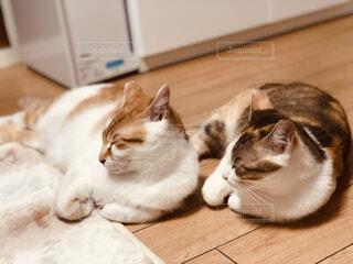 猫,動物,屋内,景色,床,子猫,ネコ科
