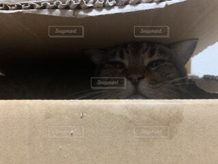 猫,動物,屋内,子猫,ネコ科