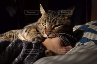 猫,動物,屋内,景色,子猫,髭,ネコ科