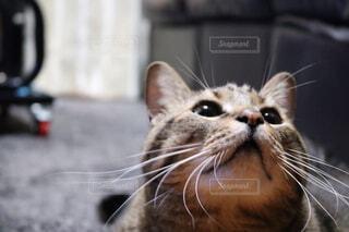 猫,動物,屋内,子猫,グレー