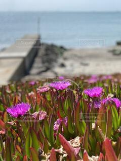 空,花,屋外,ピンク,紫,草木