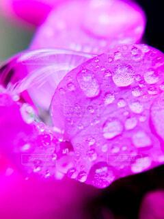 花のクローズアップの写真・画像素材[4533737]