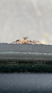 動物,車,クモ,昆虫