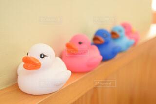 鳥,屋内,壁,鴨,グッズ,お風呂のおもちゃ,ラバーダッキー
