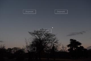 自然,風景,空,夜空,屋外,樹木,月