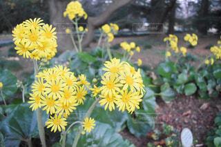 花,屋外,黄色,草,草木,フローラ