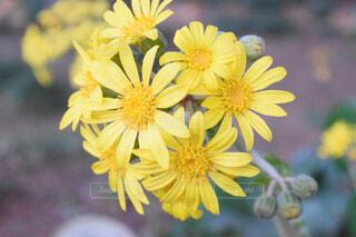 花,屋外,黄色,デイジー,草木,フローラ