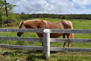 空,動物,屋外,草原,牧場,景色,草,馬,フェンス,草木,ファーム,スプリットレールフェンス