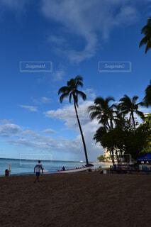 海,空,屋外,ビーチ,雲,水面,海岸,樹木,ヤシの木,ハワイ,草木,パーム