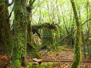 自然,屋外,樹木,ジャングル,草木,熱帯雨林