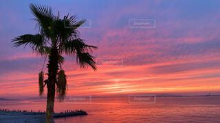 海,空,屋外,太陽,ビーチ,雲,夕暮れ,水面,樹木,ヤシの木,日の出,パーム