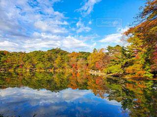 自然,風景,空,秋,屋外,湖,雲,水面,池,樹木,草木