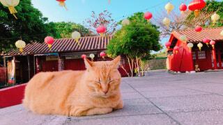 地面に横たわる大きなオレンジ色の猫の写真・画像素材[4508042]