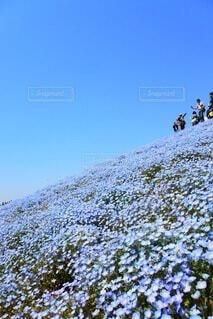思い出の丘の写真・画像素材[4841277]