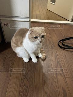 猫,動物,屋内,白,床