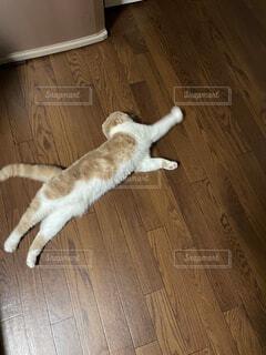 犬,猫,動物,屋内,木,床,子猫,つらい