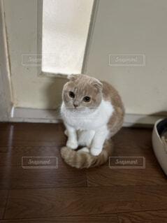 猫,動物,屋内,白,床,子猫,ネコ科