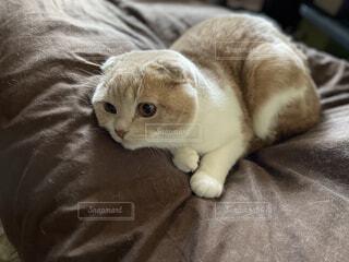 猫,動物,屋内,かわいい,景色,子猫,ネコ科
