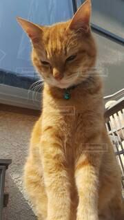 猫,動物,屋内,かわいい,窓,オレンジ,子猫,座る,ネコ科