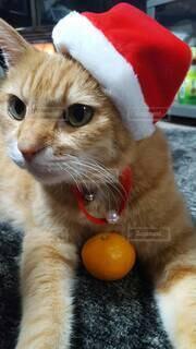 犬,猫,動物,屋内,かわいい,オレンジ