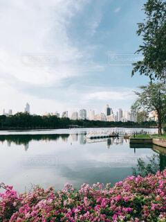 自然,空,公園,建物,花,屋外,雲,川,水面,池,樹木,高層ビル,草木