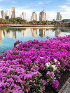 自然,空,公園,花,屋外,湖,川,水面,池,景色,草木