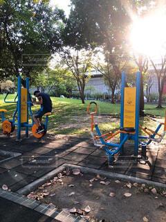 自然,公園,屋外,夕方,景色,樹木,運動器具