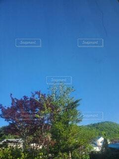 自然,空,木,庭,屋外,青い空,樹木