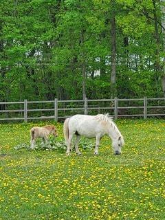 自然,動物,屋外,かわいい,馬,可愛い,お馬の親子