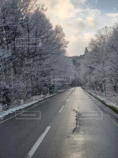 冬,木,雪,屋外,綺麗,山,山道,寒い