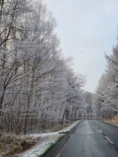 自然,冬,雪,屋外,樹木,道,冷たい,樹氷,日中