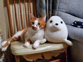 猫,動物,白,かわいい,ペット,子猫,可愛い