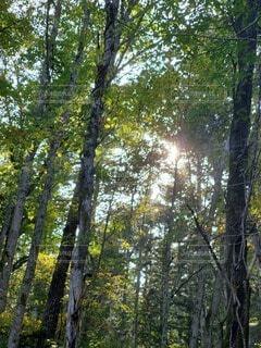 自然,風景,空,公園,屋外,山,草,樹木,森林浴,草木