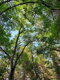 自然,空,公園,森林,屋外,葉,樹木,日陰,草木