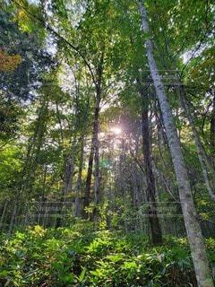 自然,風景,空,花,屋外,太陽,山,草,樹木,森林浴,草木