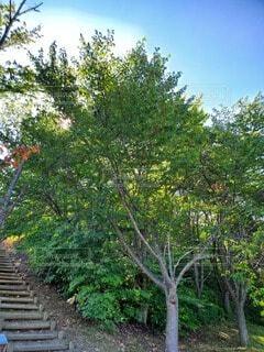 自然,風景,空,公園,花,木,屋外,葉,山,草,樹木,草木