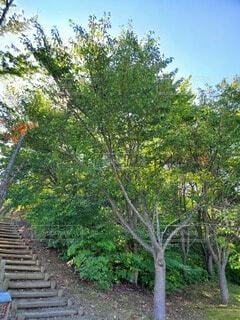 自然,風景,空,公園,花,屋外,山,草,樹木,秋桜,草木