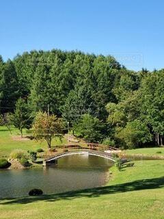 公園,屋外,池,樹木,新緑