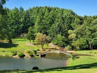 自然,風景,空,公園,屋外,緑,水面,池,草,樹木,草木,ガーデン