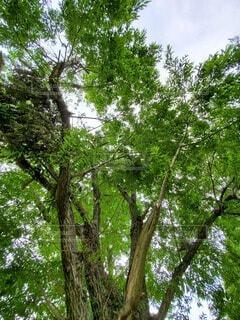 空,森林,屋外,森,樹木,草木