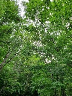 自然,森林,屋外,森,樹木,草木
