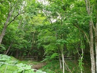 自然,森林,屋外,森,景色,樹木,新緑,ジャングル,草木