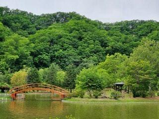 自然,風景,空,森林,屋外,緑,ボート,水面,池,樹木,草木
